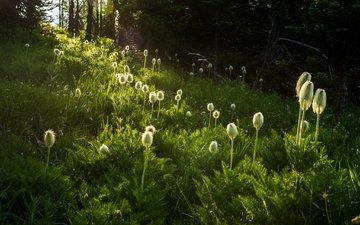 цветы, трава, природа, растения