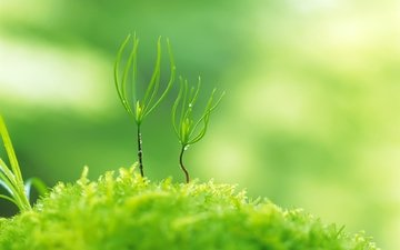 nature, greens, plants, macro, blur, moss, rostock