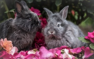 flowers, look, fluffy, ears, rabbit, rabbits