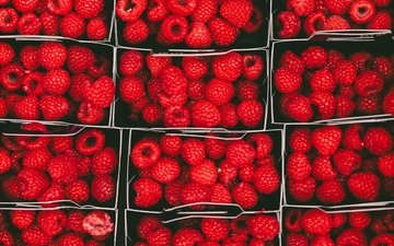 raspberry, the view from the top, ripe, berries