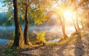 water, river, nature, shore, morning, fog, autumn