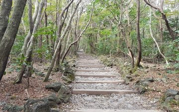 trees, stones, ladder, steps, south korea, jeju island