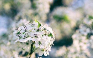 цветы, ветка, цветение, весна