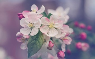 цветы, природа, дерево, цветение, листья, макро, лепестки, размытость, весна