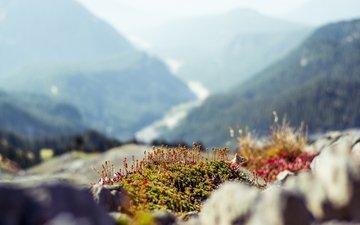 горы, скалы, холмы, растения, белка, белочка, размытые