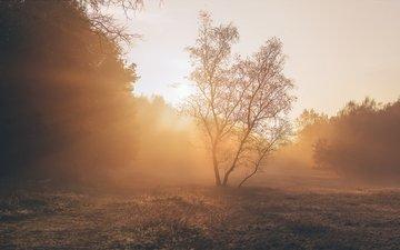свет, деревья, растения, пейзаж, парк, утро