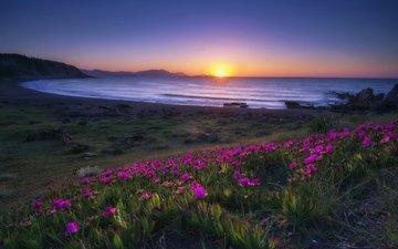 цветы, берег, закат, пейзаж, море, испания, провинция бискайя