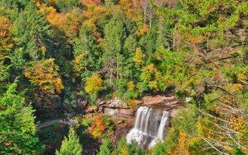 деревья, лес, водопад, осень