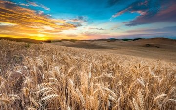 the sky, clouds, nature, sunset, landscape, field, ears, wheat