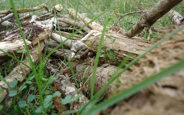 трава, растения, клевер, лес, лягушка, маскировка, древесная лягушка