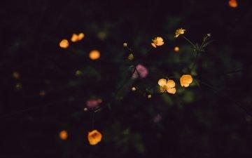 цветы, лепестки, стебли, полевые цветы, темно
