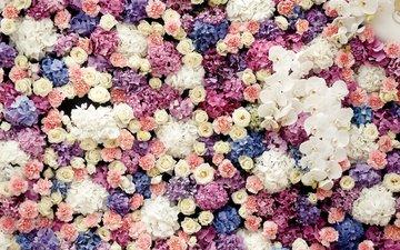 цветы, бутоны, розы, сладости, орхидеи