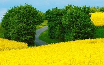 цветы, природа, пейзаж, поле, лето, луг