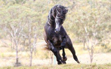 лошадь, конь, жеребец, мустанг, animals-horse-foal-mare-mammal-1920x1080-px-vertebrate-horse-like-mammal-stallion-mustang-horse-729766