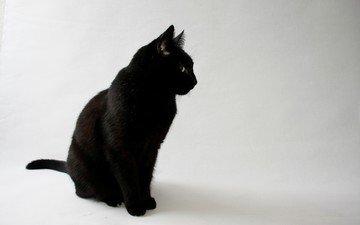 eyes, background, cat, look, black