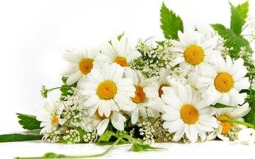 цветы, лето, лепестки, ромашки, букет, гипсофила