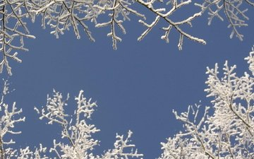 the sky, snow, tree, winter, branches