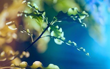 ветка, природа, листья, макро