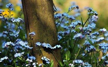 цветы, трава, природа, растения, лето, незабудки, бревно