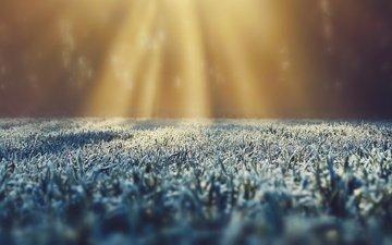 трава, иней, солнечный свет