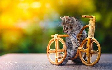котенок, игрушка, животное, велосипед, детеныш