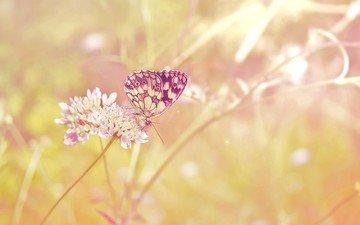 солнце, растения, макро, насекомое, цветок, поле, лето, бабочка, стебель, солнечные лучи