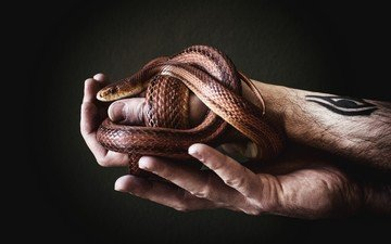 змея, руки, мужчина, татуировка, aleks daiwer