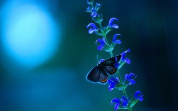 macro, insect, background, flower, color, butterfly, wings