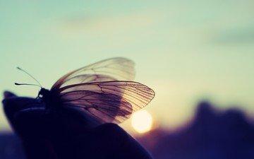 свет, макро, насекомое, бабочка, крылья, блики