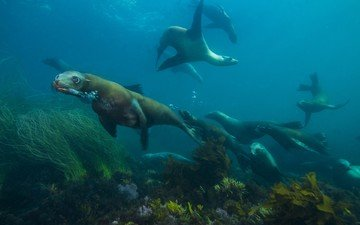 animals, the ocean, seal, underwater world