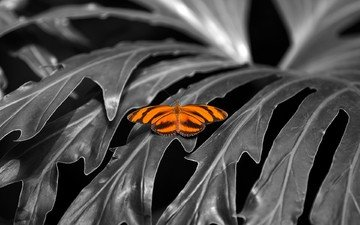 leaves, insect, butterfly, wings, plant