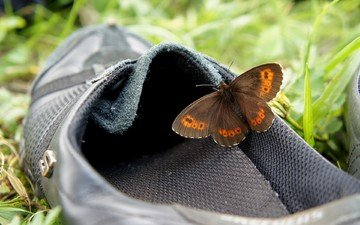 grass, insect, butterfly, wings, shoes