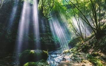 trees, water, river, nature, forest, waterfall, stream, jungle, the sun's rays, vegetation