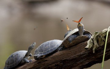 shell, butterfly, turtles