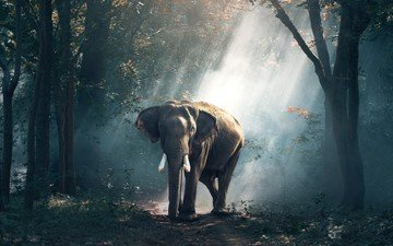 nature, forest, rays, elephant, india
