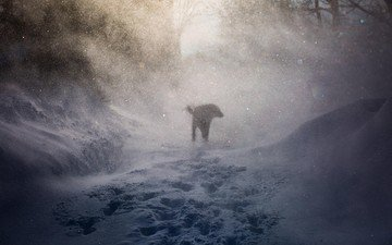 snow, nature, winter, dog, traces, the wind, blizzard