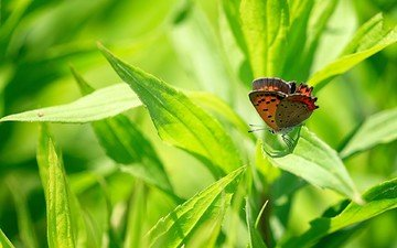grass, insect, butterfly, wings