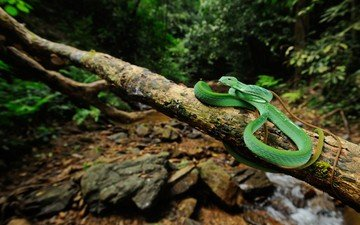 nature, tree, leaves, snake, tropics, jungle, reptile, reptiles