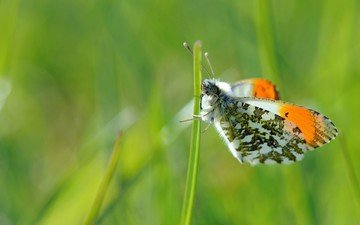 grass, nature, plants, insect, butterfly, wings, meadow