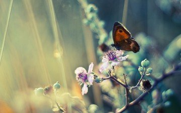 flowering, insect, butterfly, wings, spring