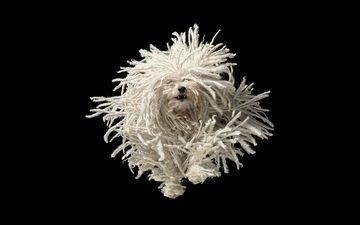 dog, black background, bullets, running, tim flach