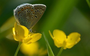 flowers, insect, butterfly, wings