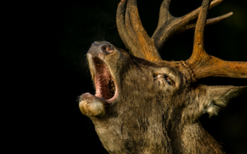 deer, black background, animal, horns, andywak