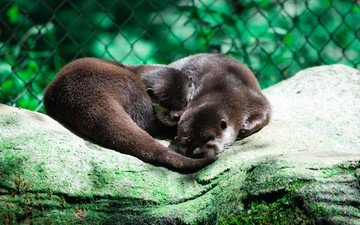 animals, mesh, zoo, otter