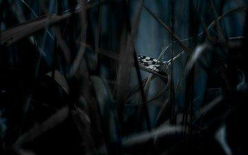 трава, насекомое, бабочка, крылья, темнота