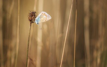 grass, plants, insect, butterfly, wings, stems