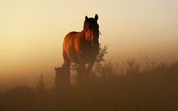 лошадь, восход, утро, рассвет, конь, грива, степь, жеребенок