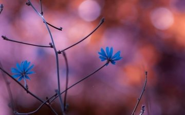 flowers, nature, plants, branch, blur, ch, blue flowers