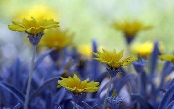 цветы, макро, полевые цветы, боке