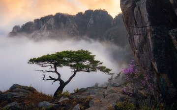 flowers, grass, clouds, mountains, tree, landscape, rock, fog, bush, pine
